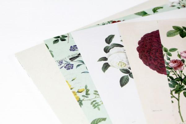 """Karton-Set """"Botanicals"""""""